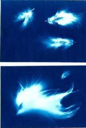 Cyanotypes of feathers made by Amanda Jirón-Murphy.