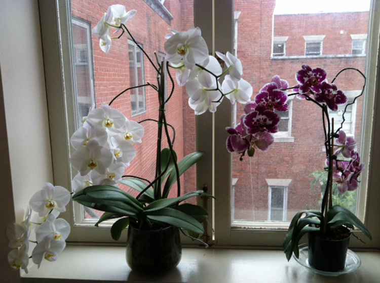 Photo of orchids in the museum staff break room by Darci Vanderhoff