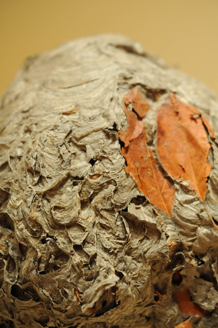Hornet's Nest, up close. Photo: Joshua Navarro