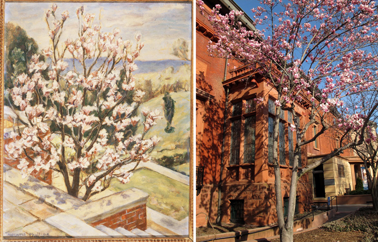 Marjorie Phillips, Little Magnolia Tree, undated, Oil on canvas board
