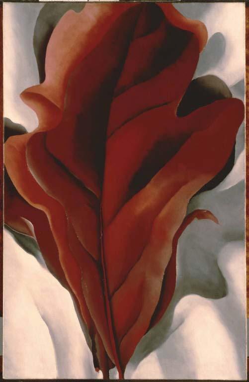 "Georgia O'Keeffe, ""Large Dark Red Leaves on White""; 1925, Oil on canvas, 31 x 21 in., The Phillips Collection, Acquired 1943; © 2008 The Georgia O'Keeffe Foundation/Artists Rights Society (ARS), New York."